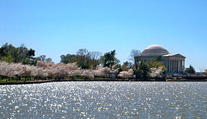 English: The Tidal Basin at the National Cherr...