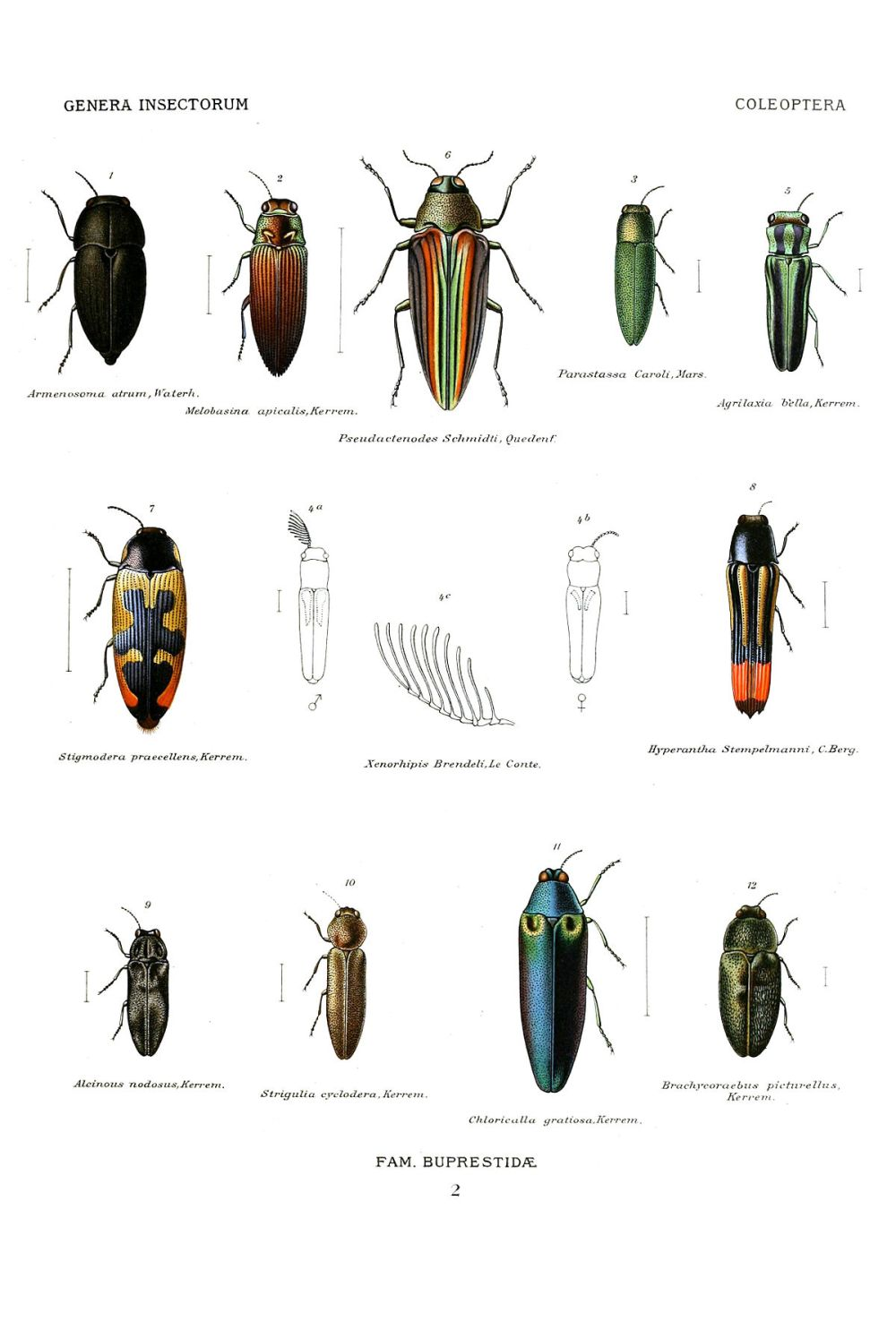 medium resolution of beetle insect diagram