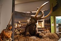Hyogo Prefectural Museum of Archaeology07s3872.jpg