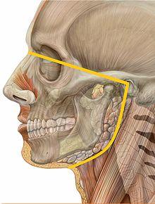 Oral medicine  Wikipedia