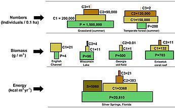 tropical rainforest food web diagram aprilia rs 50 wiring wikipedia ecologicalpyramids jpg