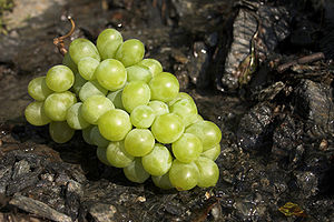 A green wine grape.