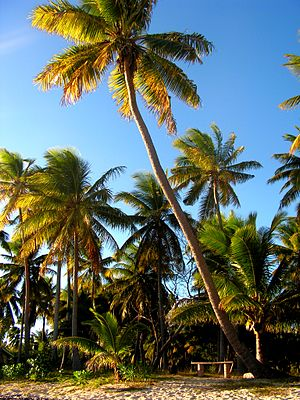 Sunset Bench (Fiji)