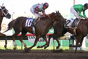 Horse race. Canterbury Downs in Shakopee, Minn...