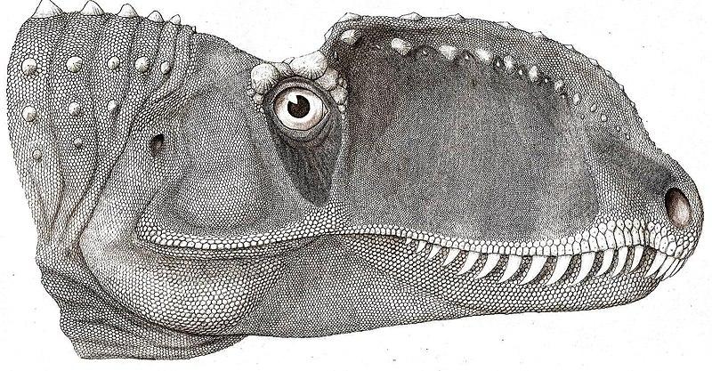 Oviraptorid Jaw Muscles Described, Part 2 | The Bite Stuff