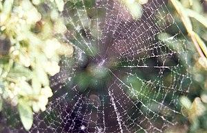 Old spider web