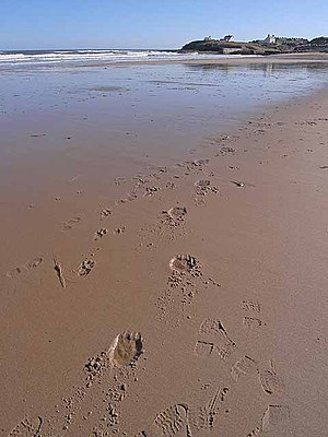 English: Footprints in the sand And what look ...