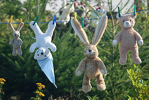 Teddys on a clothesline.