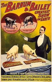 Comment S Appelle Le Petit Du Cochon : comment, appelle, petit, cochon, Wikipédia