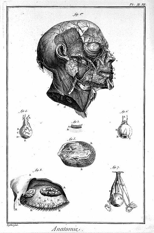 Arteries Of The Face Comprandofacil Co