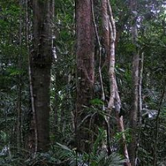 Tropical Rainforest Diagram Double Dimmer Switch Wiring - Wikipedia