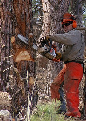 Man using a chainsaw with all recommended safe...