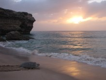 Green trurtle at ras al jinz oman.JPG