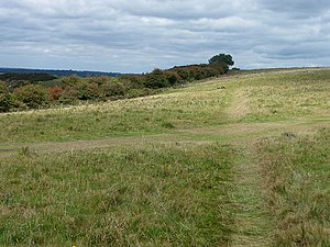 English: Paths crossing on top of Butser