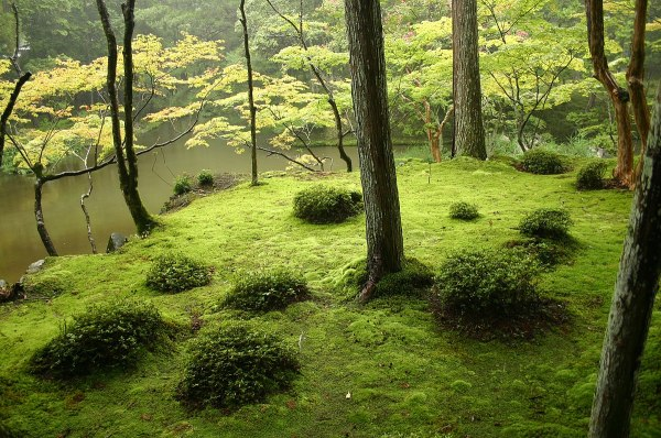 japanese garden - wikipedia
