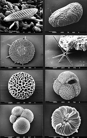 Micropaleontology Simple English Wikipedia The Free