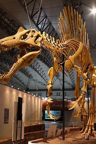 File:Mounted Spinosaurus.jpg