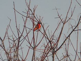 Bird on tree branch