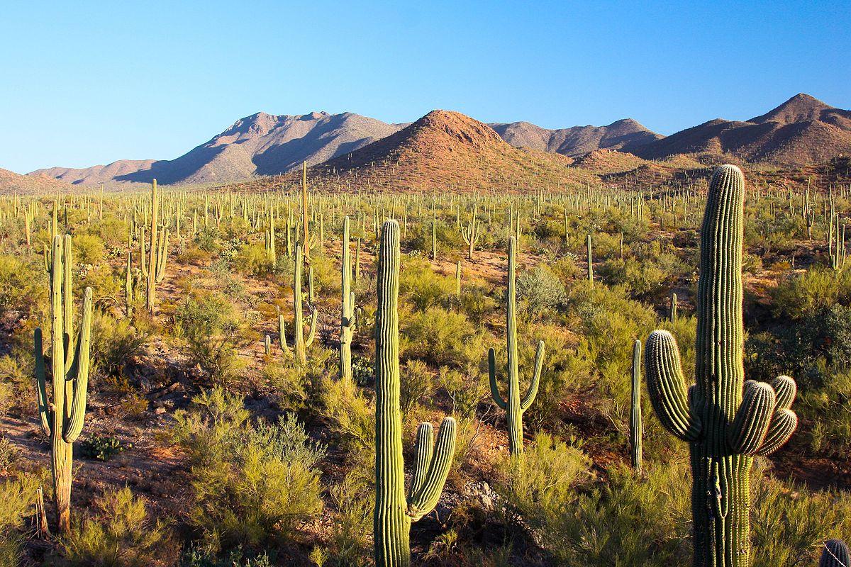 Deserto de Sonora – Wikipédia. a enciclopédia livre
