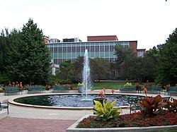 密西根州立大學 - 維基百科,自由的百科全書