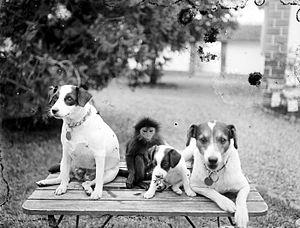 Nederlands: Negatief. Honden en een aap als hu...