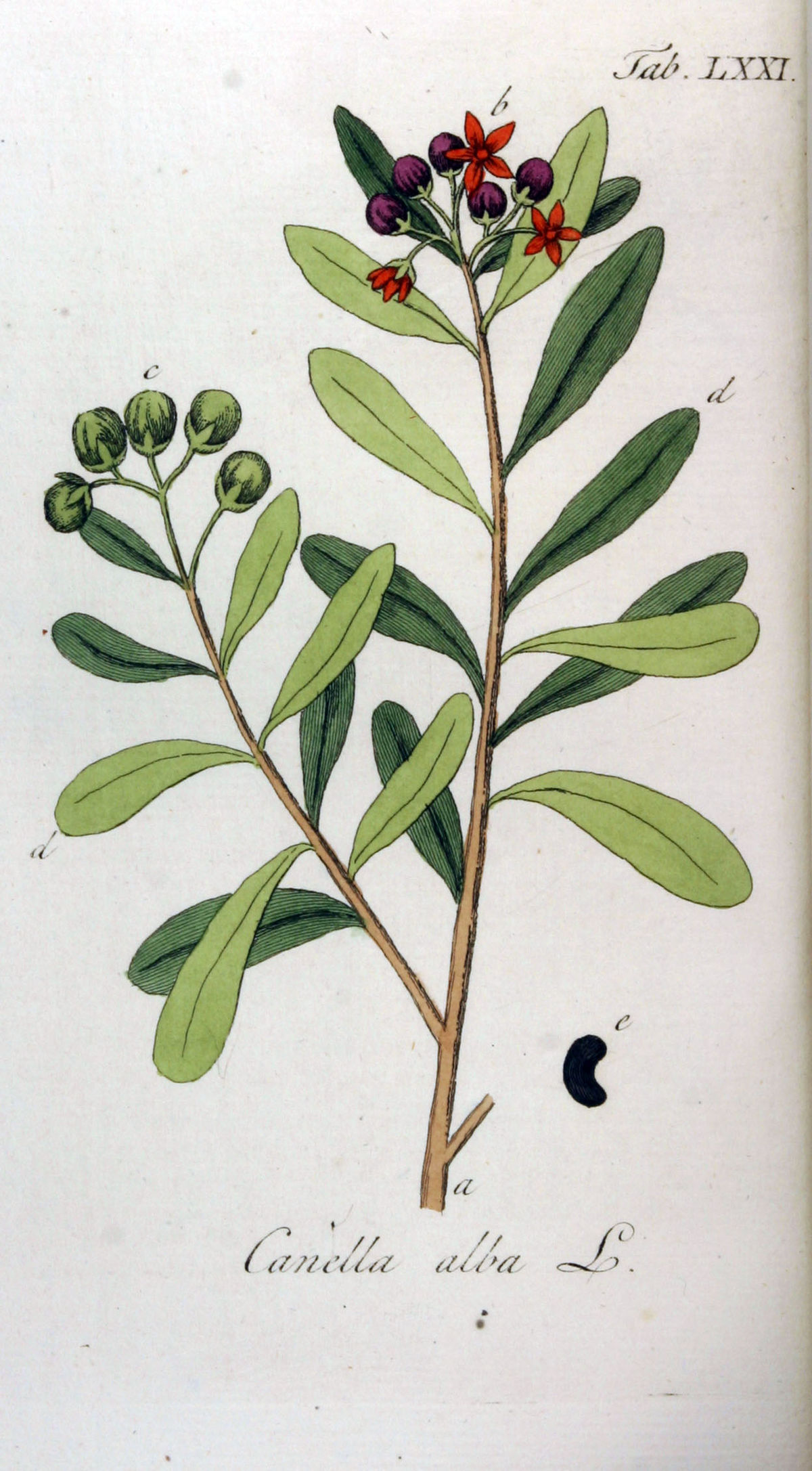 Evergreen Flowering Plants