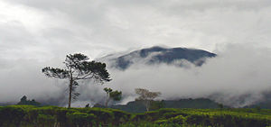 Mount Gede, as seen from the tea plantation @ ...