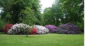 English: Rhododendronpark in Bremen, Germany D...