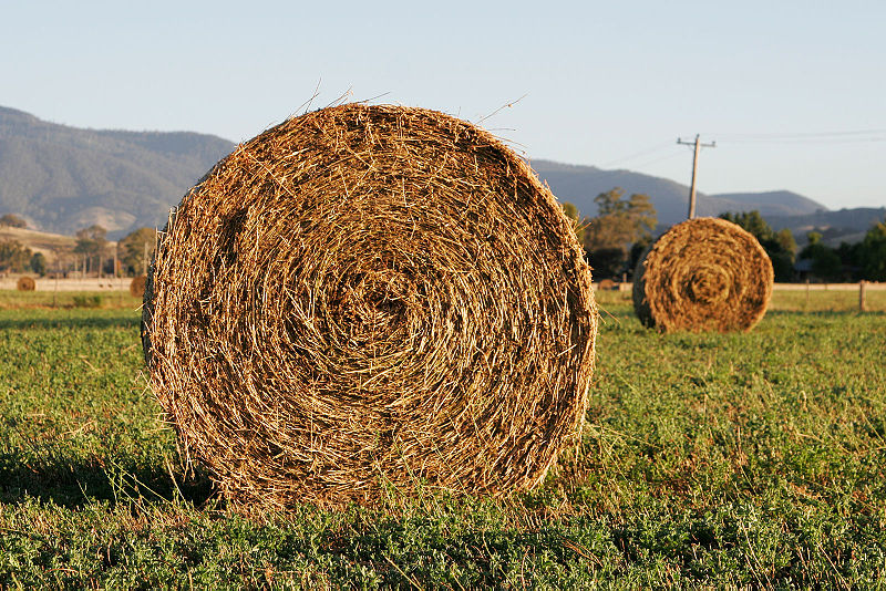 File:Round hay bale at dawn.jpg