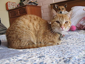 English: cat and dog Español:gato y perro