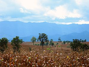 View over the cornfields towards the mountains...