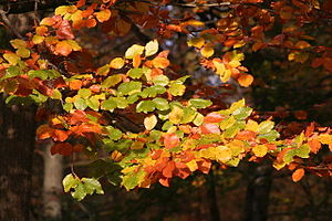 English: Autumn Colours - Forest of Dean. Autu...