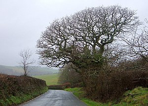 Brain-Shaped Tree - geograph.org.uk - 342922
