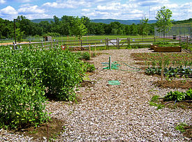 outline of organic gardening and farming