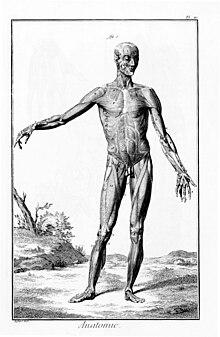Science — Wikipédia