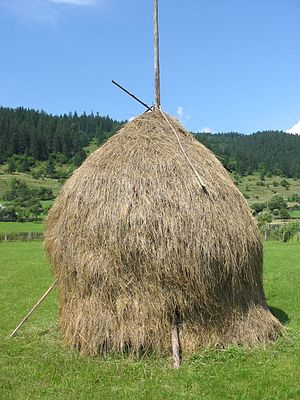 Traditional hay from Romania Română: Căpiţă tr...