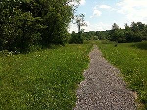 Nature trail, upstate NY
