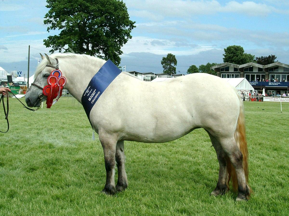 1 Man 1 Horse Wikipedia