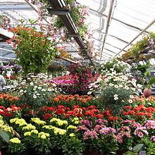 Gartenbau  Wikipedia