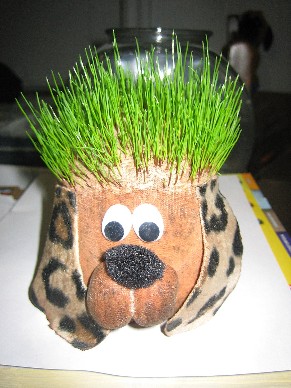 Chia Pet Images : images, File:Chia, Pet.jpg, Wikimedia, Commons