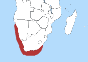 The Distribution of the African Penguin