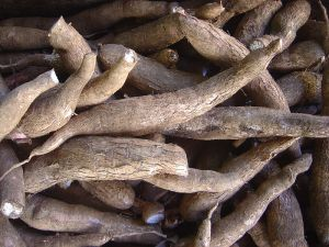 Raw unpeeled yuca
