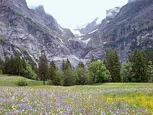 Meadow in full flower near Grindelwald in the ...