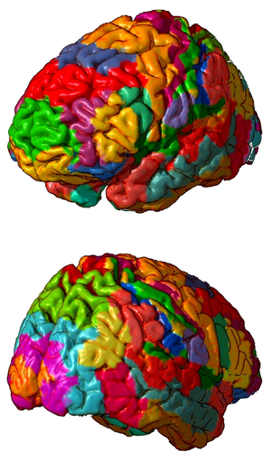 3D representation of brodmann areas.