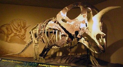 File:Ceratopsian.jpg