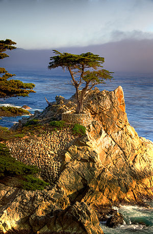English: The Lone Cypress at Monterey Bay (17 ...