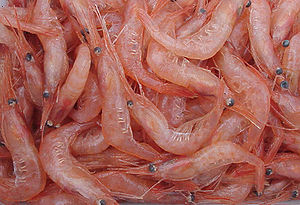A heap of :en:Pandalus borealis shrimp.