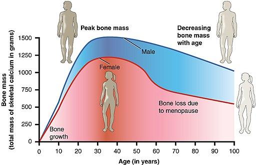 615 Age and Bone Mass