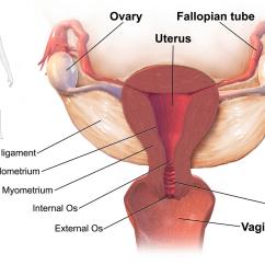 Blank Digestive System Diagram To Label Labeled Skin Pelvic Inflammatory Disease - Wikipedia