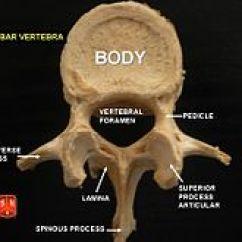 Bones Of The Skull Anterior View Diagram Medieval Castle Labeled Lumbar Vertebrae - Wikipedia